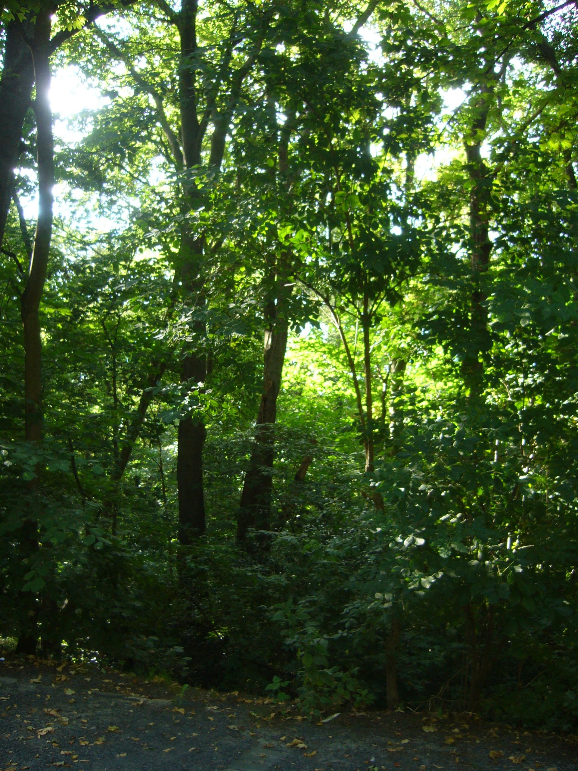 Entspannung im Lichtwald