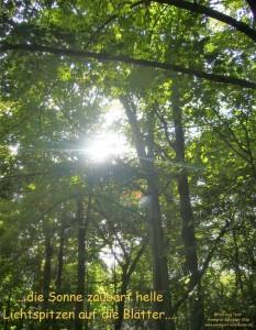 entspannung-im-lichtwald-web