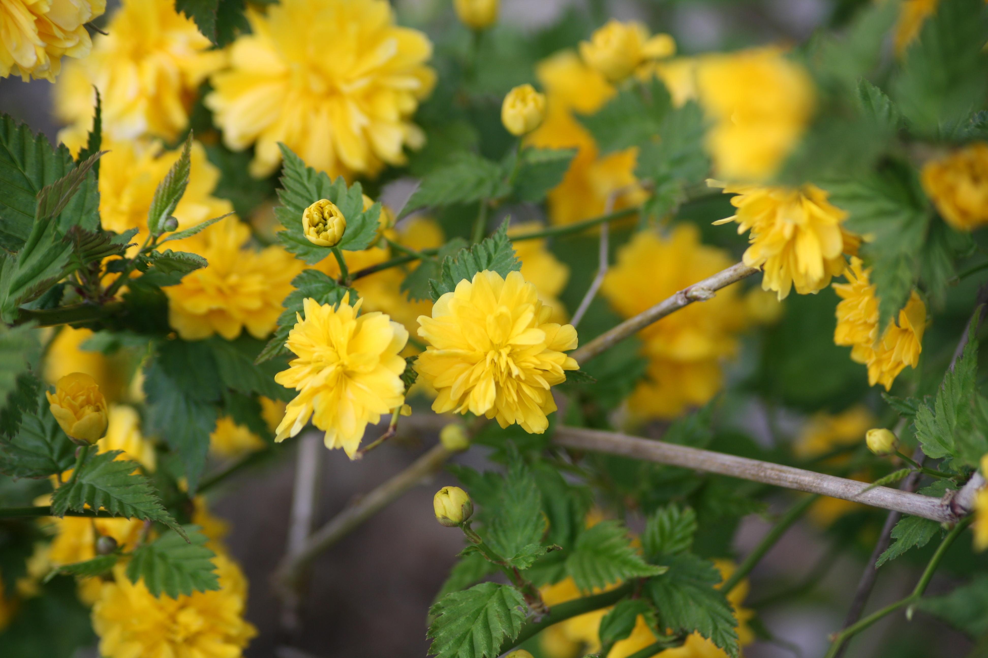 Achtsamer Frühlingsspaziergang